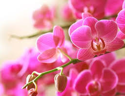 orchid flower how to care for your orchids