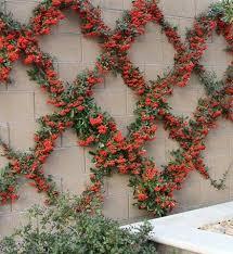 35 best trellises images on pinterest gardening garden trellis