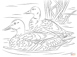 pair of mallard ducks coloring page free printable coloring pages