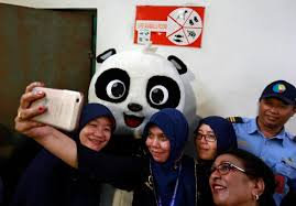 giant pandas arrive in indonesia in pictures the national
