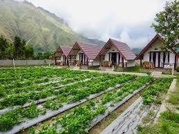 nuansa rinjani bungalow sembalun accommodation lombok hsh stay