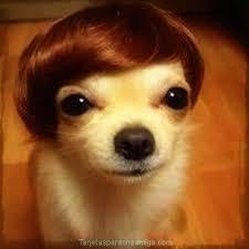 Fotos Para Memes - fotos graciosas de perros para hacer memes