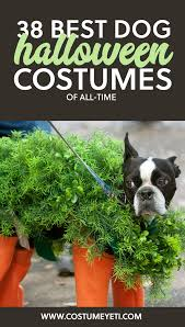 Pet Halloween Costumes 38 Best Dog Halloween Costumes Of All Time Costume Yeti