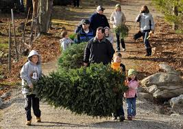 list of cut your own christmas tree farms in central mass news