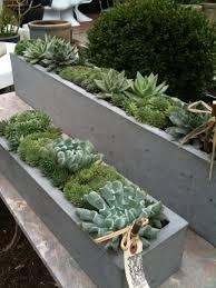 Concrete Rectangular Planter by Succulents U0026 Concrete Pool Goals Pinterest Ideas De