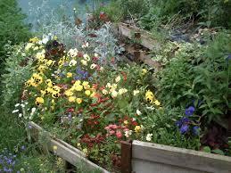 plante vivace soleil plantes vivaces aux serres du breuil 28