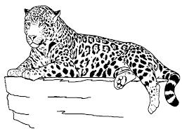 jaguar drawing for kids