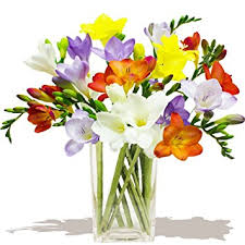 birthday boquets classic mixed freesias bouquet birthday flowers thank you and