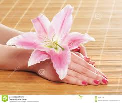 beautiful female hands with polished nails and a flower stock