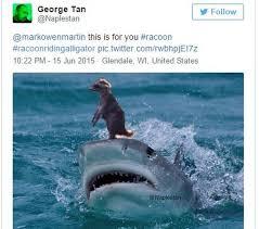 Gator Meme - man captures photo of raccoon riding an alligator bbc news