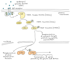 Cell Reproduction Concept Map Answers Introduction To Cell Signaling Article Khan Academy