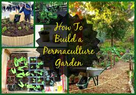 diy permaculture garden guide green global travel
