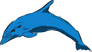 dolphin blue ocean leaping png image pictures picpng