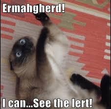 Ermahgerd Animal Memes - what is the best ermahgerd quora