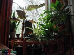 beautiful indoor plants fresh beautiful indoor plant ideas for eco friendly 23201 modern
