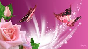 Roses And Butterflies - butterflies and roses pictures 52 on picture with