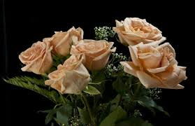 Peach Roses What Do Flower Colors Mean In Relationships Pairedlife