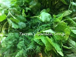 Herb Container Garden - teresa u0027s garden song container gardens growing herbs