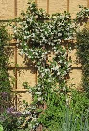 104 best plants images on pinterest landscaping flower