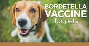 pet vaccinations 101