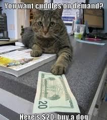 Cute Funny Cat Memes - buy a dog funny cat meme