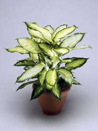 Easy To Care For Indoor Plants Fresh Easy To Care For Houseplants That Improve The Interior