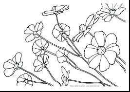 flower coloring pages nature free adults mandalas book intricate