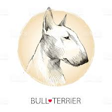vector sketch of english bull terrier dog head profile stock