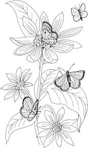 detailed butterfly coloring pages for adults butterfly coloring pages for adults umnistanbulstudyabroad com