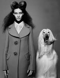 afghan hound urban dictionary 334 best images about pet photo ideas on pinterest pet