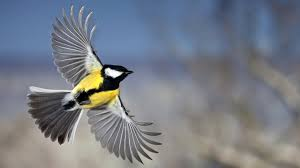 bird wallpaper sapporo bird wallpapers free download hd wallpaper