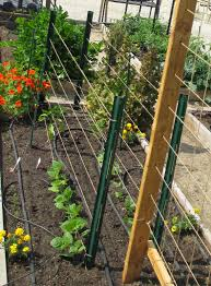 andie u0027s way trellis ideas for tomatoes cucumbers beans peas