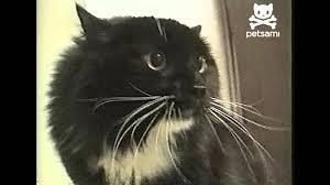 Talking Cat Meme - talking cat says oh long johnson youtube