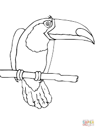 toucan in the jungle coloring page free printable coloring pages