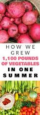 2016 vegetable garden totals in pounds brooklyn farm