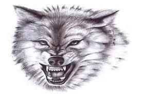 wolf a5 tshirt transfer snarling wolf transfer a5