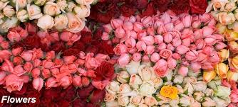 Wholesale Roses Fresh Cut Roses Wholesale Roses Roses Export Roses Import