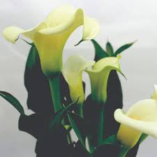 cala lilly crafters choice calla fragrance 328 wholesale
