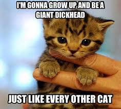 Grow Up Meme - i m gonna grow up cat meme cat planet cat planet