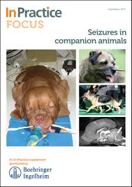 canine idiopathic epilepsy in practice