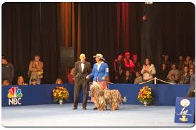 Dog Show Thanksgiving Day Silver Pastori Bergamascos Bergamasco Sheepdog Breeder About Us