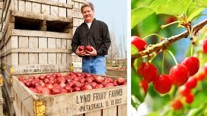 give fruit trees a try ohio farm bureau