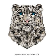 head snow leopard full face symmetry stock vector 591816524
