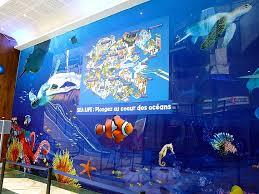 bureau vall馥 beynost bureau vall馥 boulogne sur mer 36 images aquarium sea tarif 28