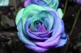 Teal Roses Simply Creative U0027happy Flowers U0027 By Peter Van De Werken