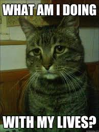 Sad Kitty Meme - whatever cat you get to sleep all day and food is just given to you