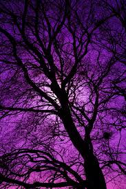 purple tree silhouette free stock photo domain pictures