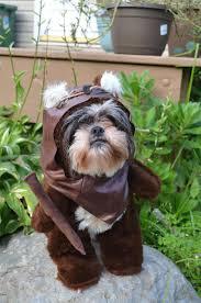 Dog Halloween Costumes Cute Funny Lol Ewoks Furry Brown Dog Halloween
