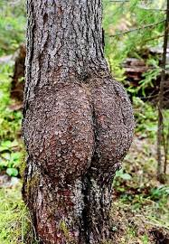 37 trees that look like something else and will make you look
