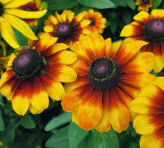Summer Flowers For Garden - 25 types of flowers to plant for summer summer flowers